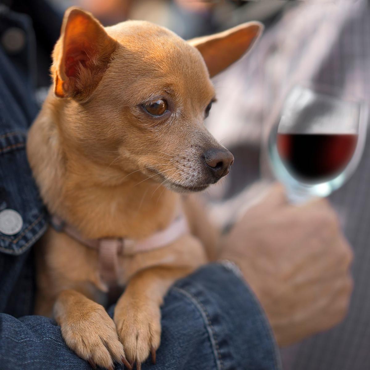 dog_wine