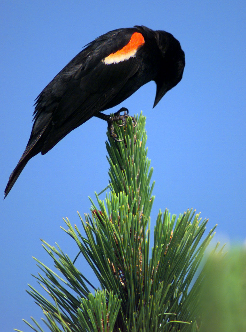 BIRDS.15241