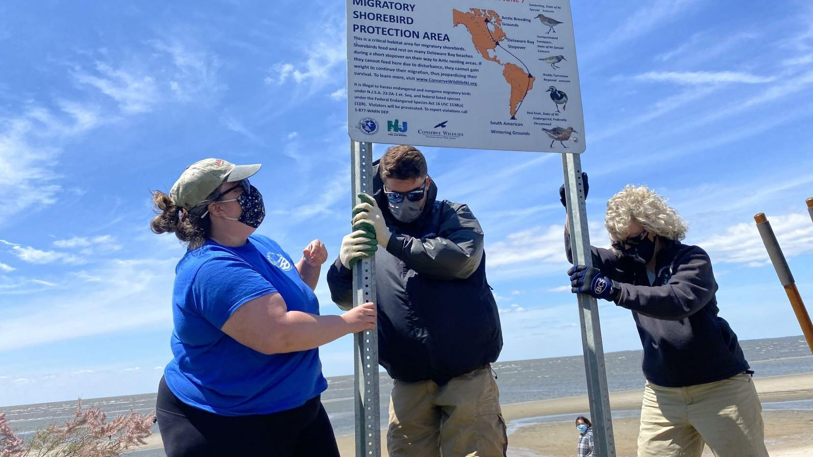 Our view: Horseshoe crabs, phenomenal shorebirds helped by allies in South Jersey