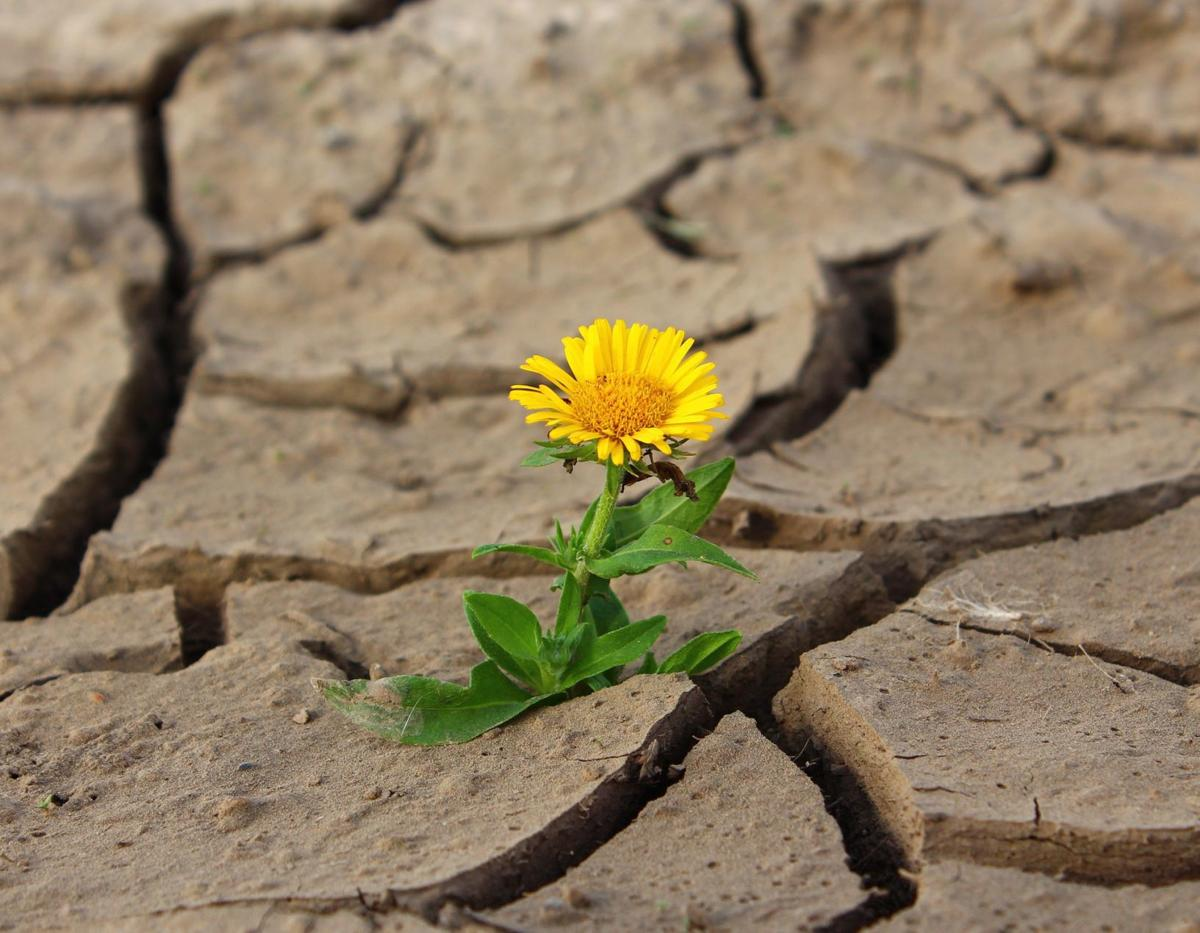 Flower and Drought