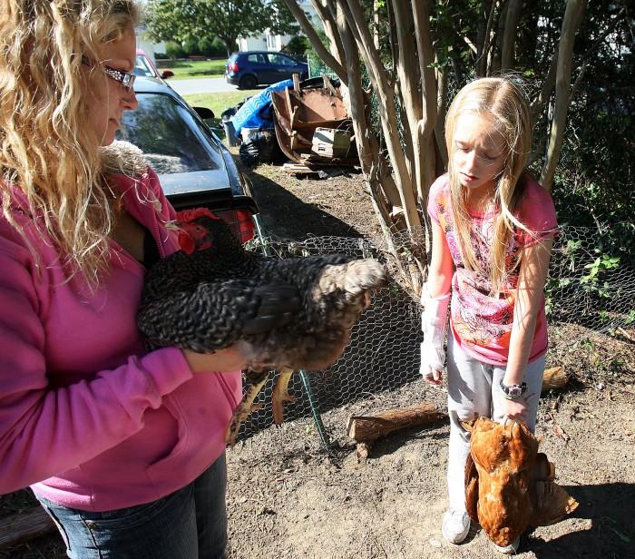 Chickens77510019.jpg