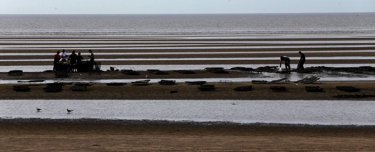 Delaware Bay Estuary Conservation