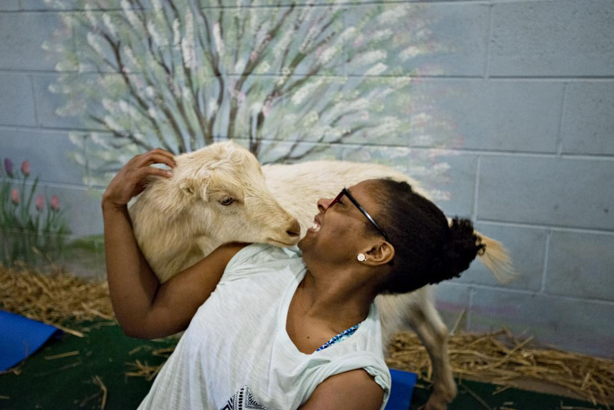 Millville Goat Yoga
