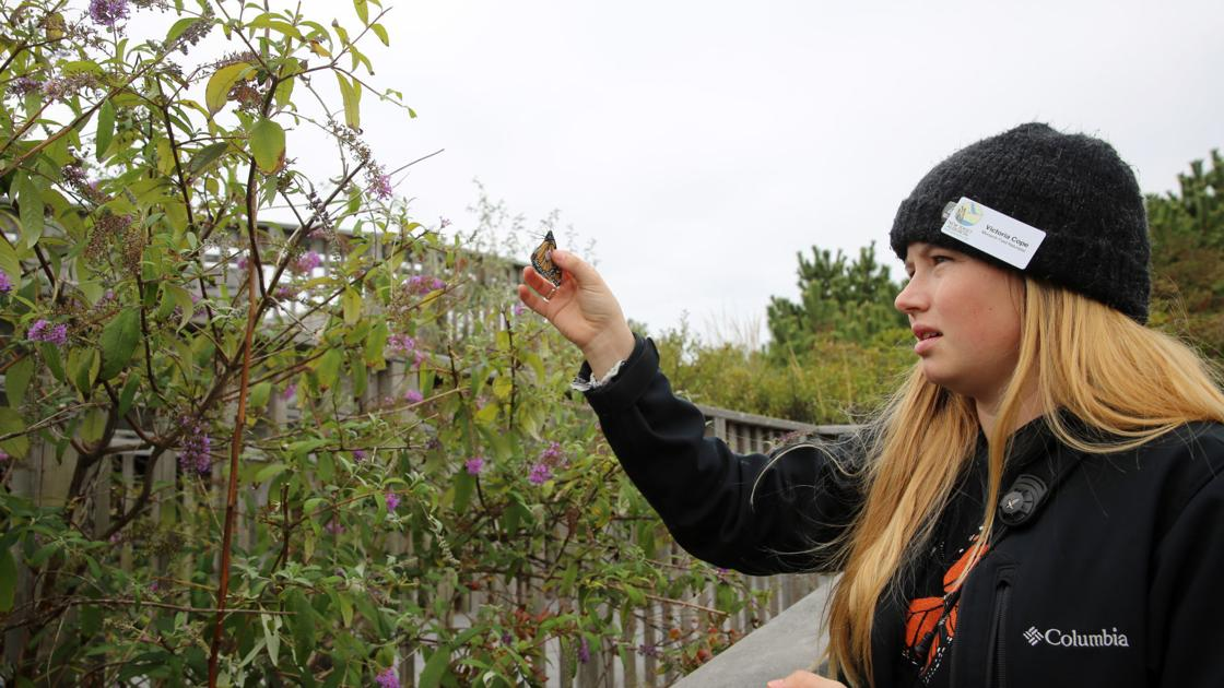 Young researchers help with monarch migration, before taking their own course