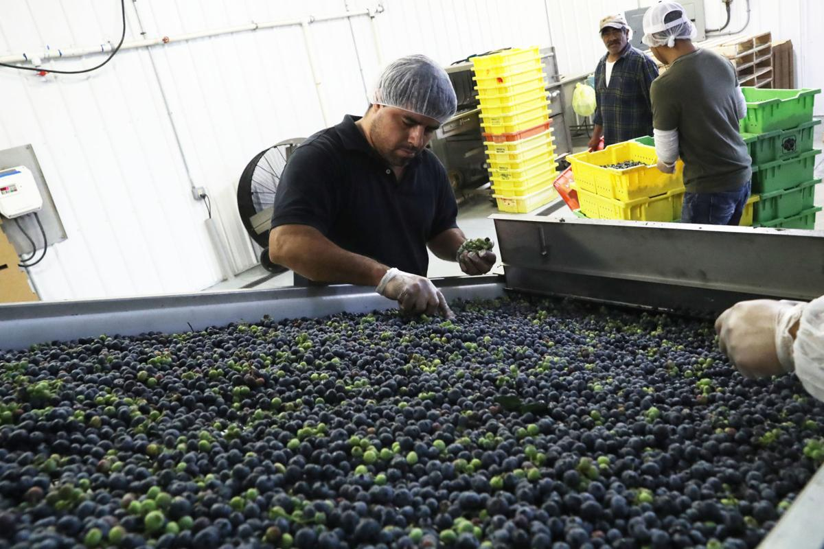 Celebrating success of blueberry farms in Hammonton