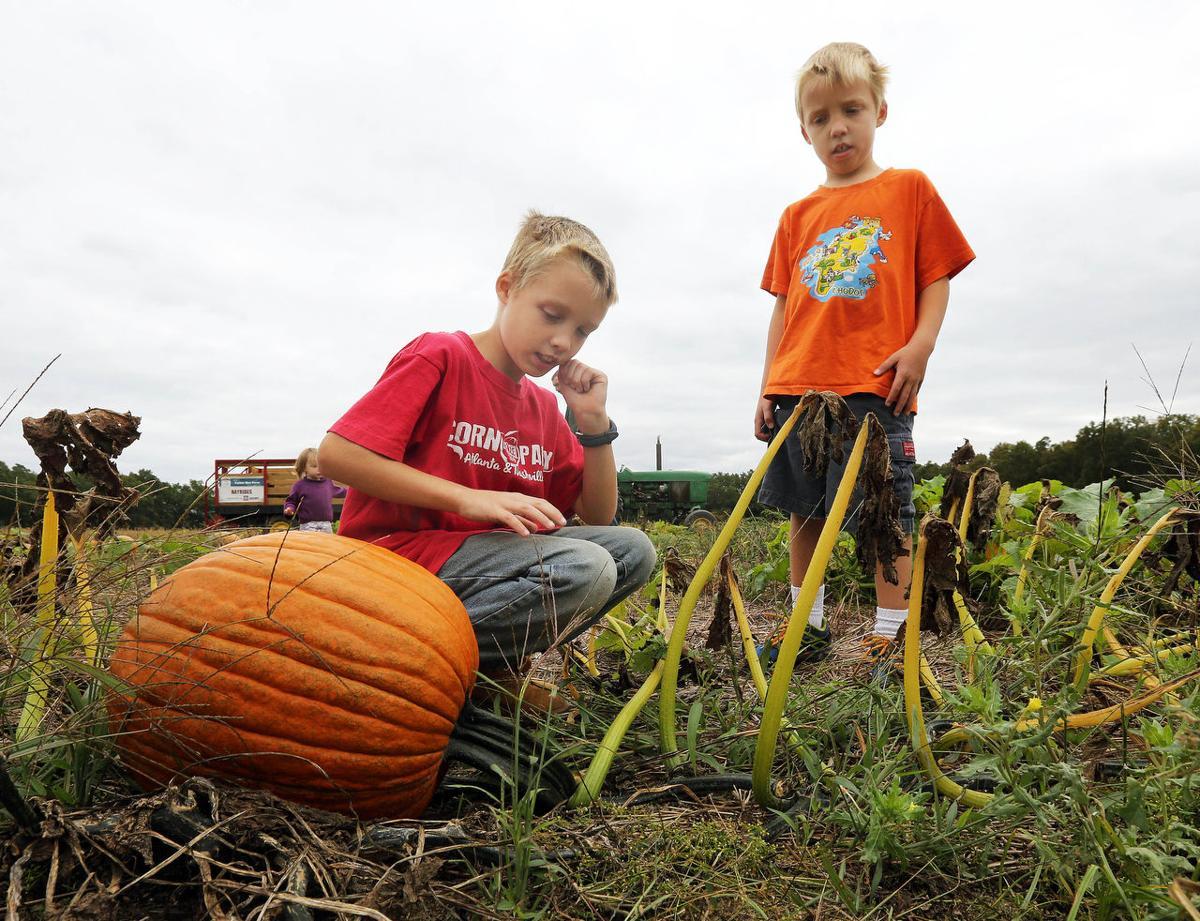 Dry Summer Had Its Benefits Local Farmers Say Latest Headlines Pressofatlanticcity Com