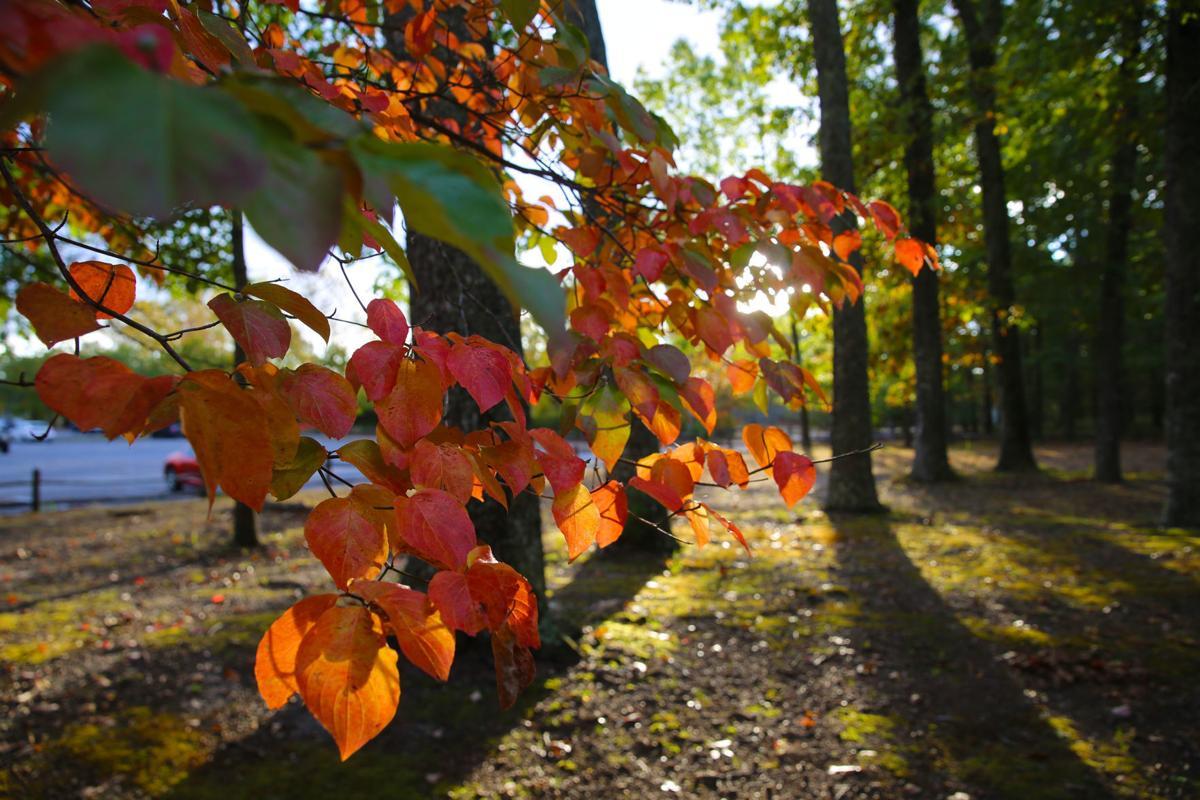 Sunny Fall Foliage