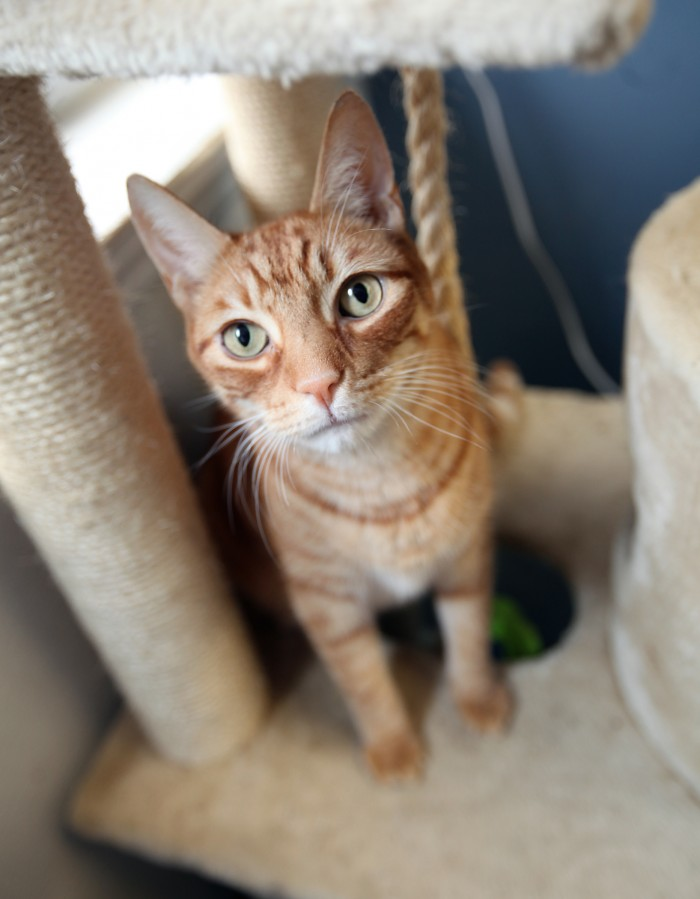 Ocean County animal shelters overrun with cats and dogs