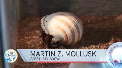 Martin Z. Mollusk