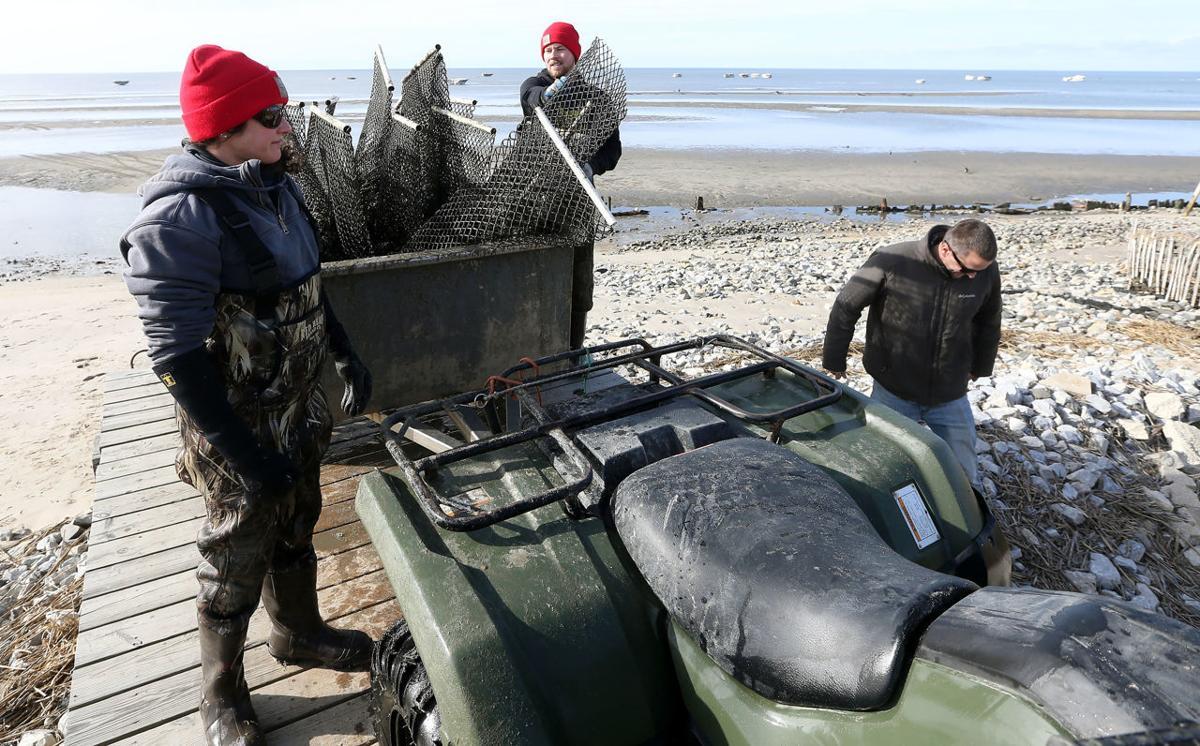 Winter Oyster Farming