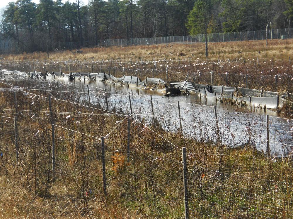 EPA finds arsenic recontamination at Vineland's Blackburg Branch