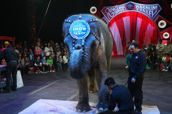 Circus takes care of its animals