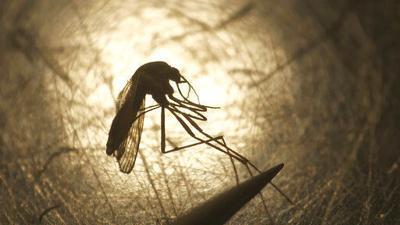 Uptick seen in rare mosquito-borne virus in some US states