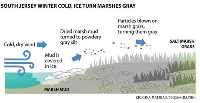 Winter cold, ice turn salt marshes gray explainer