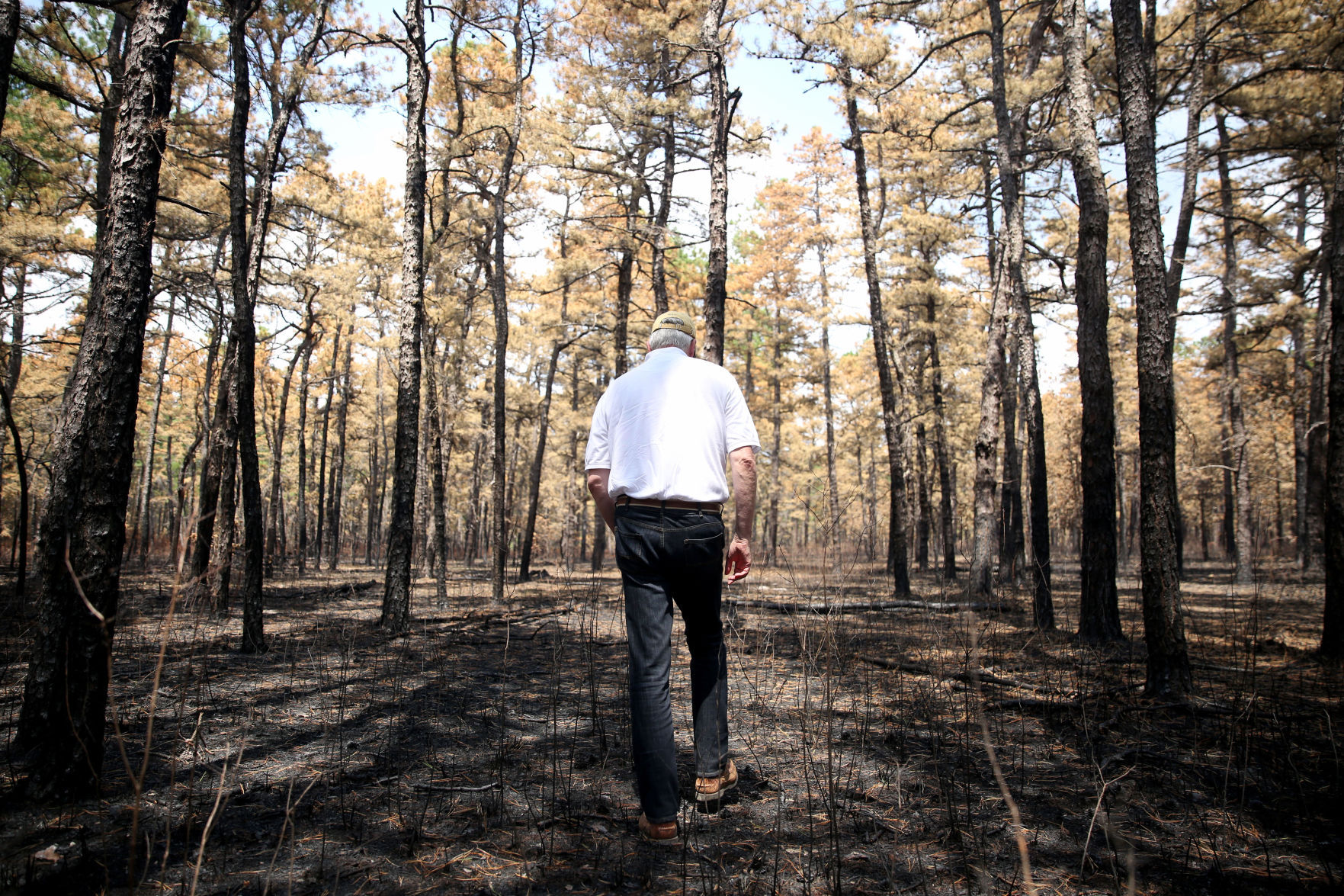 What the Wharton State Forest fire can