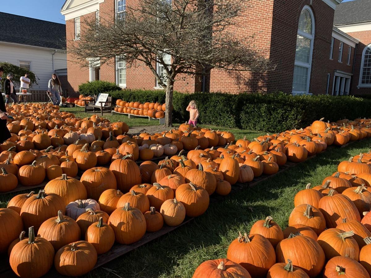 100120_lns_pumpkins central M pumpkins 2