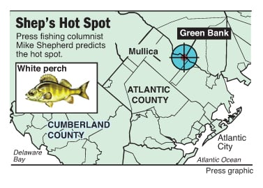 Shep on fishing white perch are biting in mullica river for White perch fishing rigs