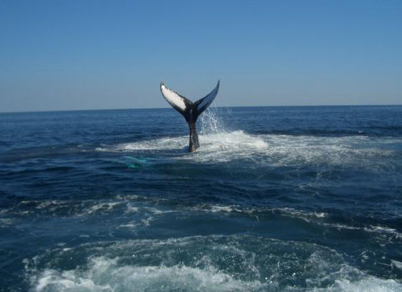 2fc77c4e7 A fisherman photographed a whale he believes is the same that washed ashore  in Wildwood Crest. Thomas R. Swider
