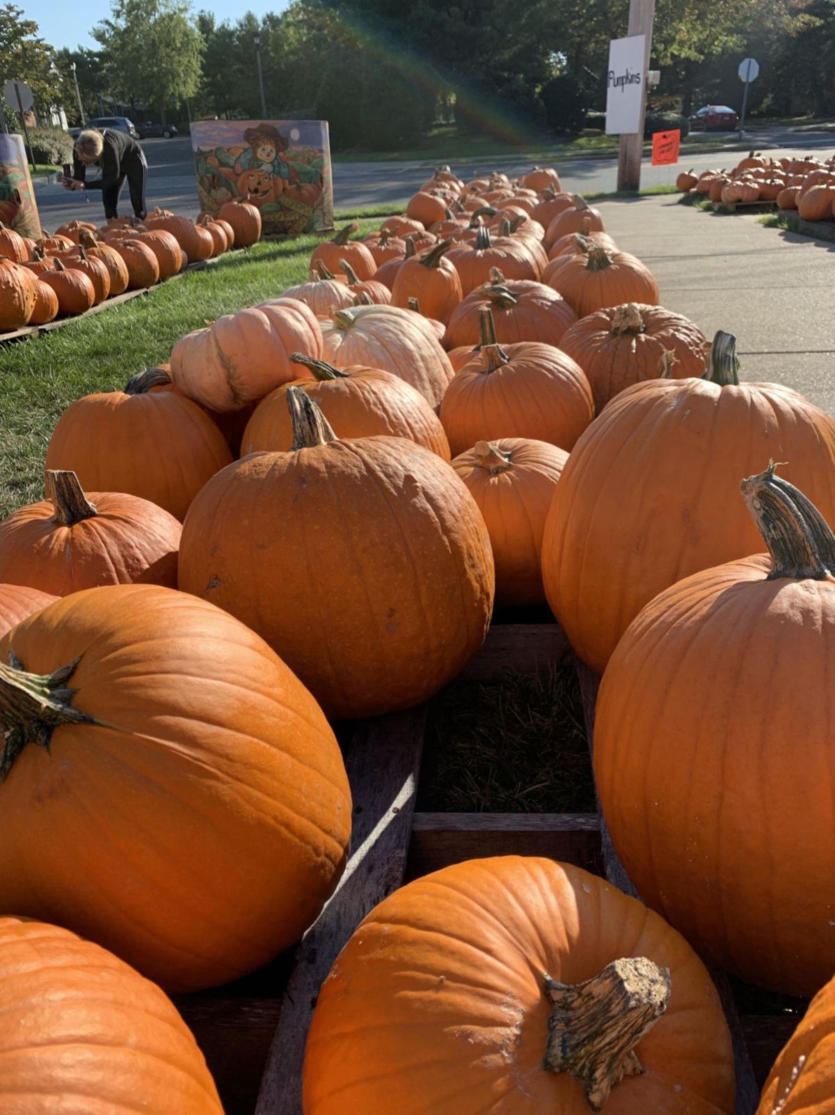100319_lns_pumpkins 1