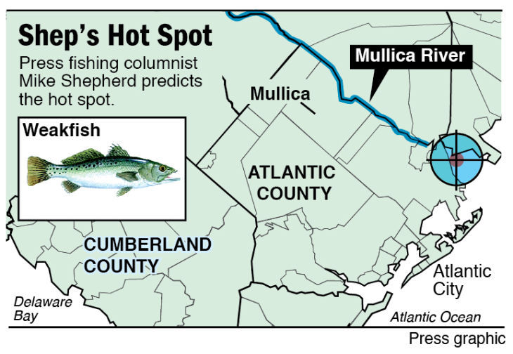 Shep Hot Spot weakfish Mullica River