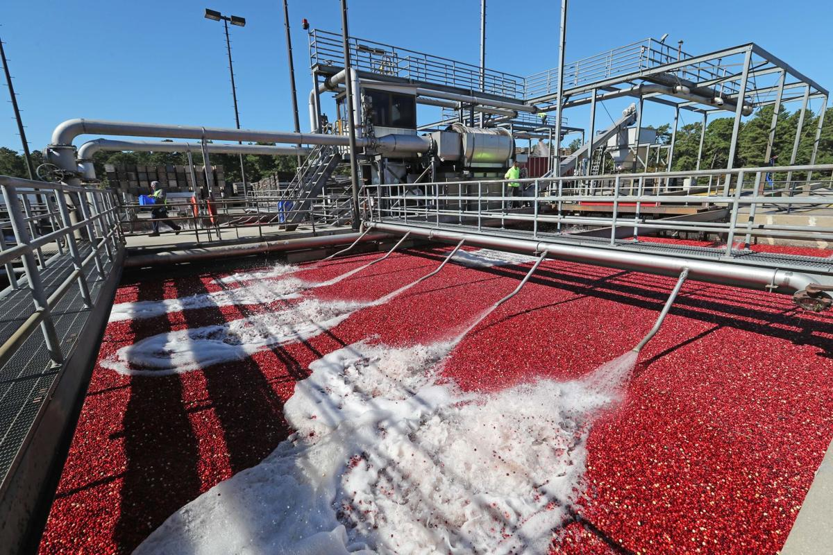 South Jersey's Cranberries