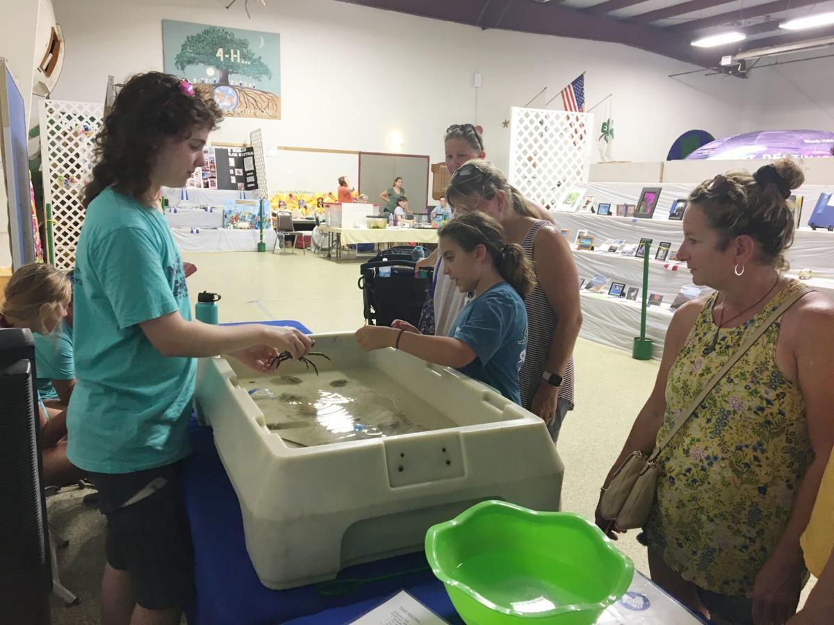 091219_cap_leadership Jake Pender demonstrates marine animals to visitors at the 4-H Fair in J...