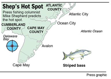 Shep's Hot Spot