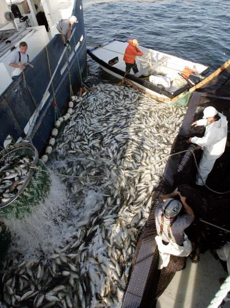 Day One: An old-school fishery: Elusive bunker make high-tech gadgets useless | Features | pressofatlanticcity.com