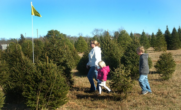 Atlantic County - Although Christmas Tree Farms Are Harder To Come By, The Tradition