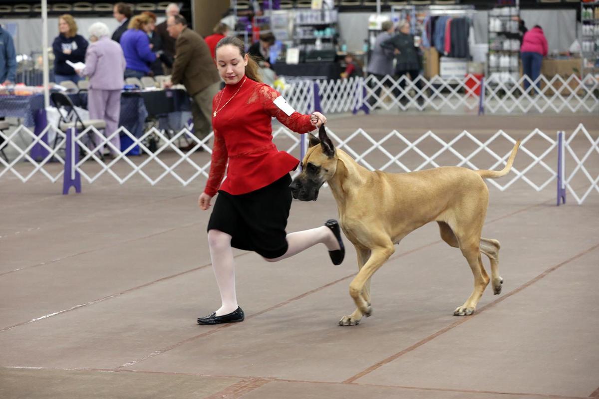 Monroe Kennel Club Dog Show