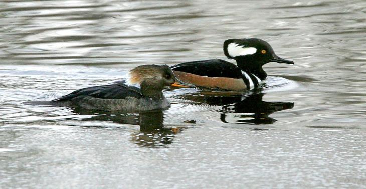Birds Of Southern New Jersey Press Of Atlantic City