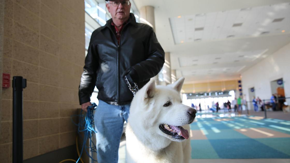 Dogs show off at Boardwalk Kennel Club All Breed Dog Show