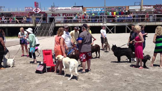 Wildwood Welcomes Dogs On Beach At Poplar Avenue