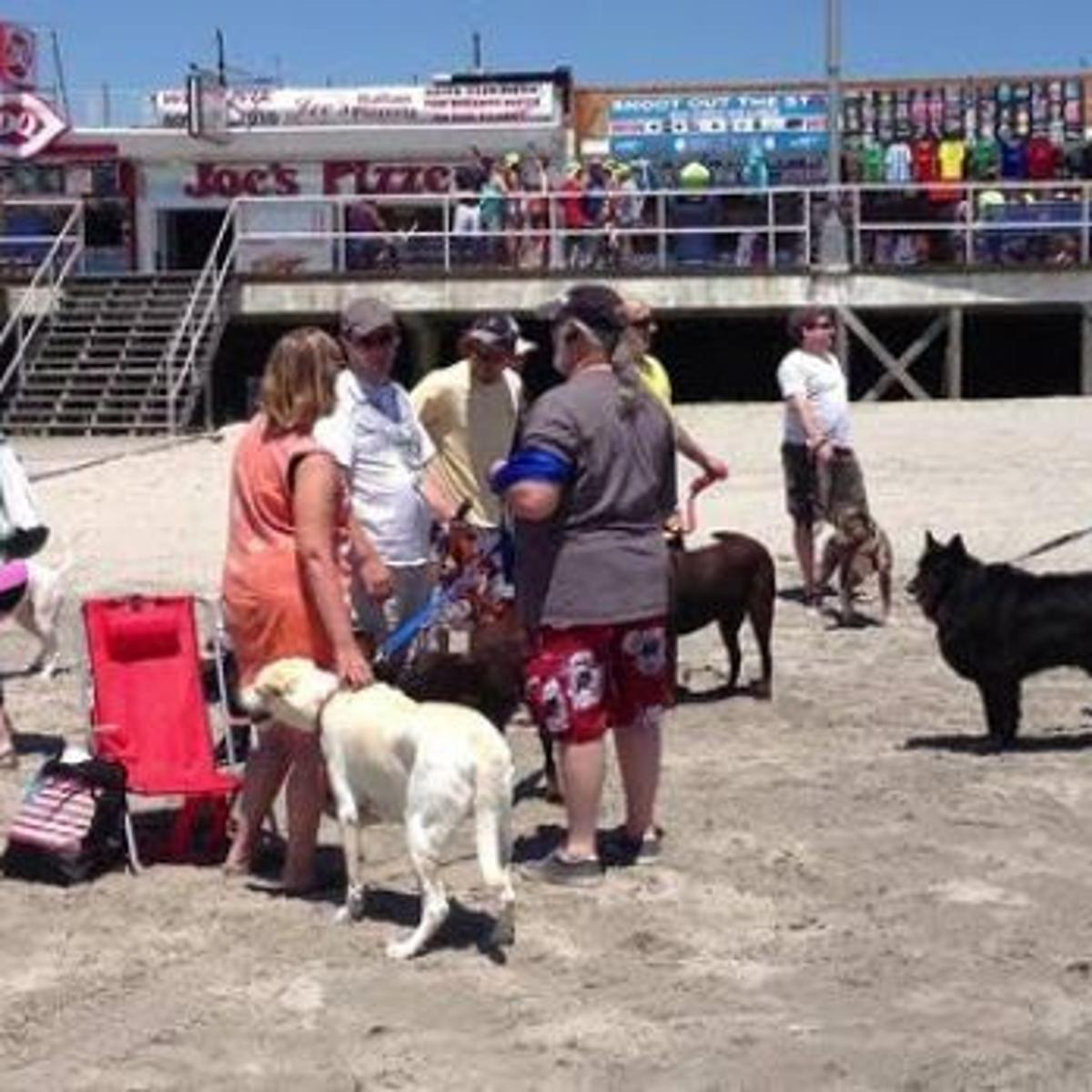 Wildwood Welcomes Dogs On Beach At Poplar Avenue Archive