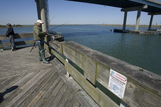 Taking the bait by truck directly to anglers top for Atlantic city fishing pier