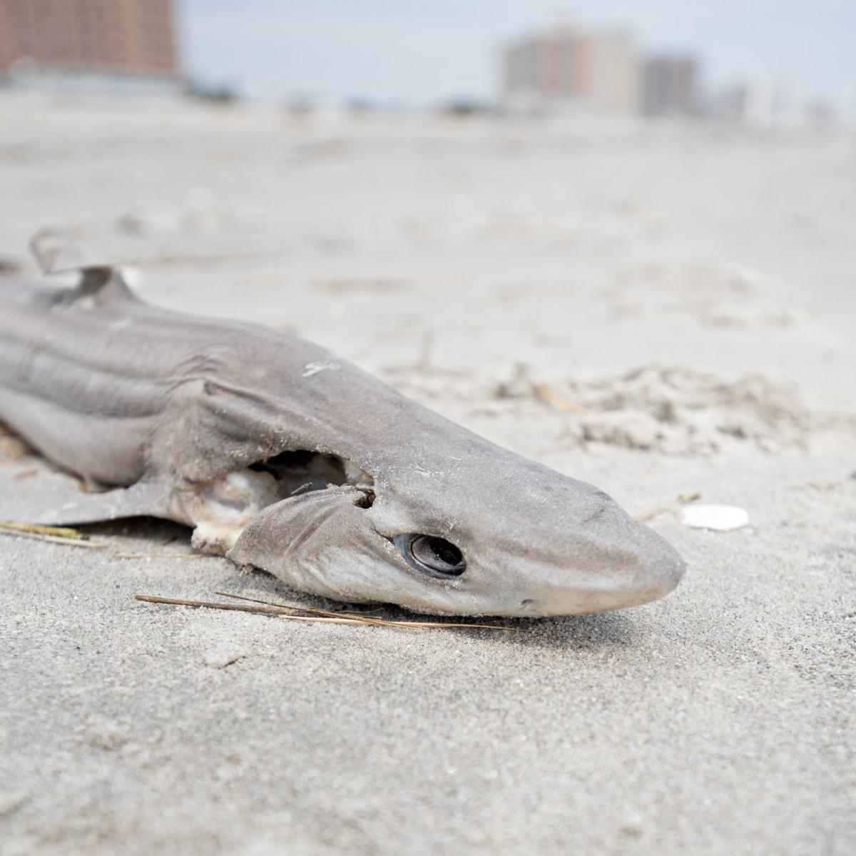 032519_nws_shark