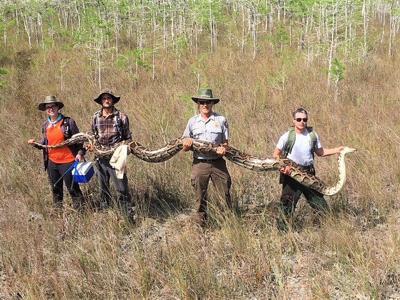 17-foot, 140-pound python captured in Florida park