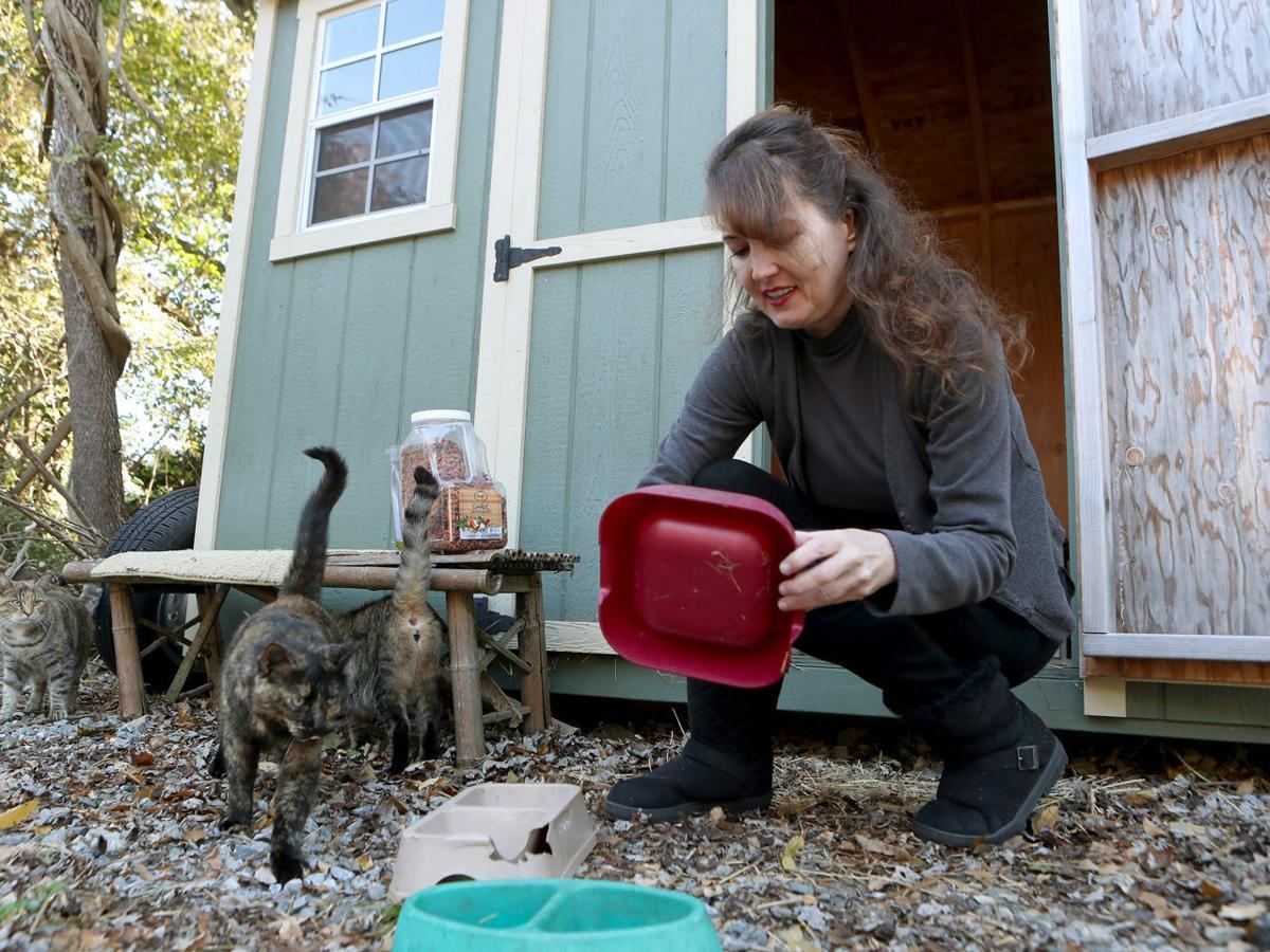 Feral Cats Linda Gentille