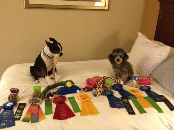 Cape women take dogs to Kennel Club championship