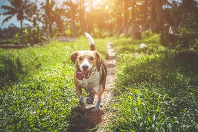 There's a growing debate over spaying and neutering dogs