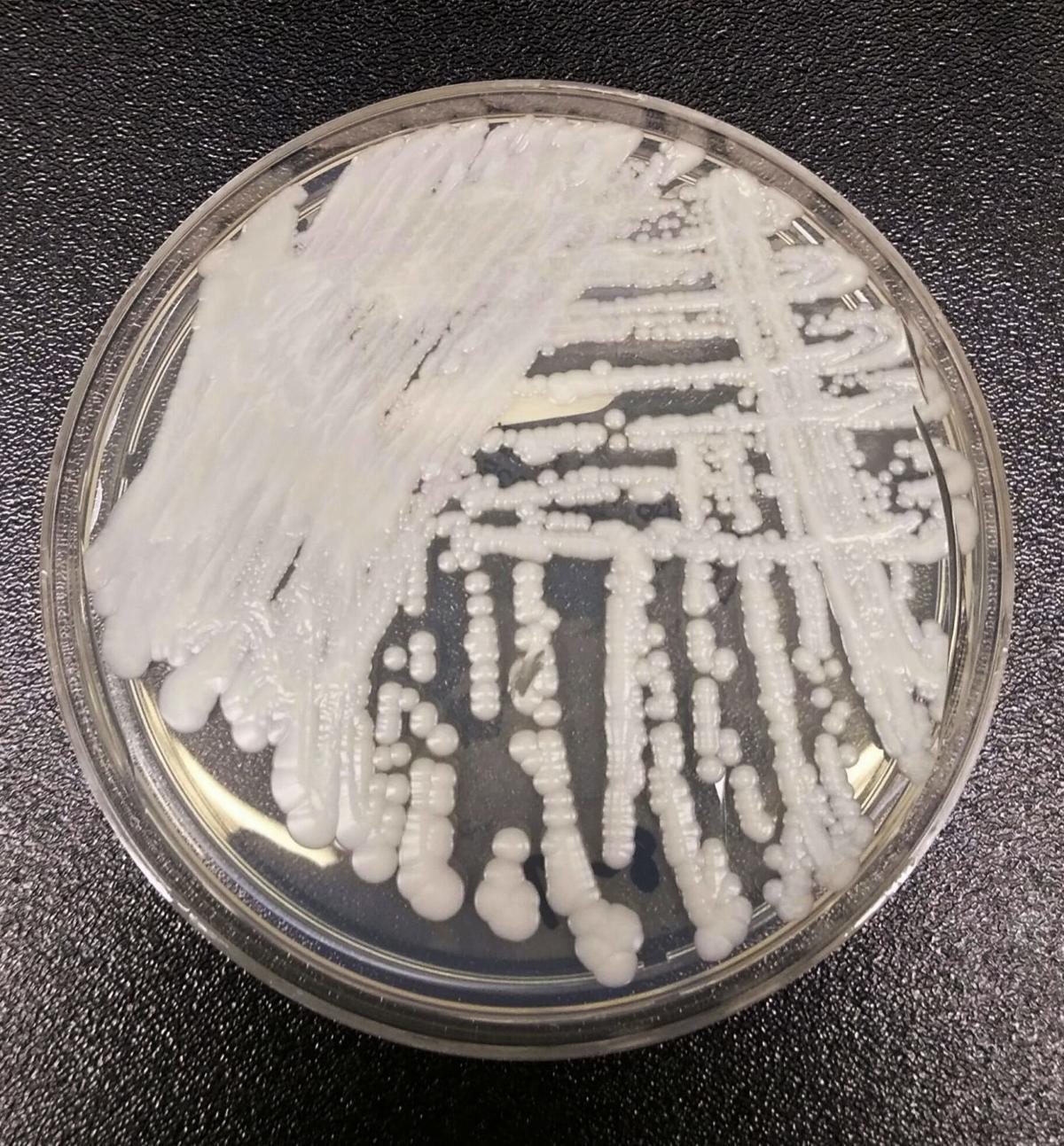 Superbug Fungus