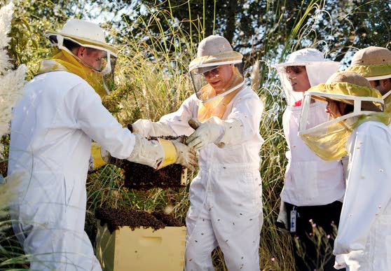 Google's official beekeeper keeps the company buzzing with excitement