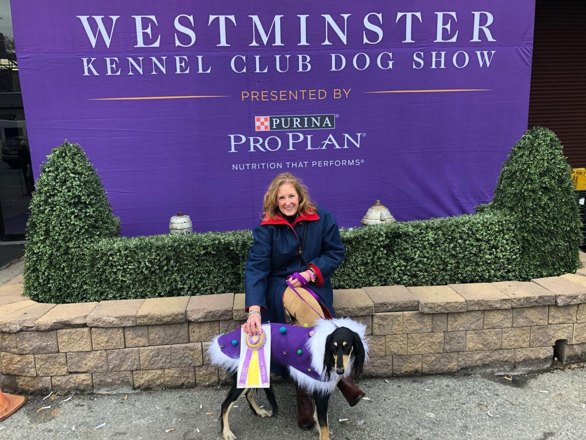 Cape May Saluki in contention at Westminster