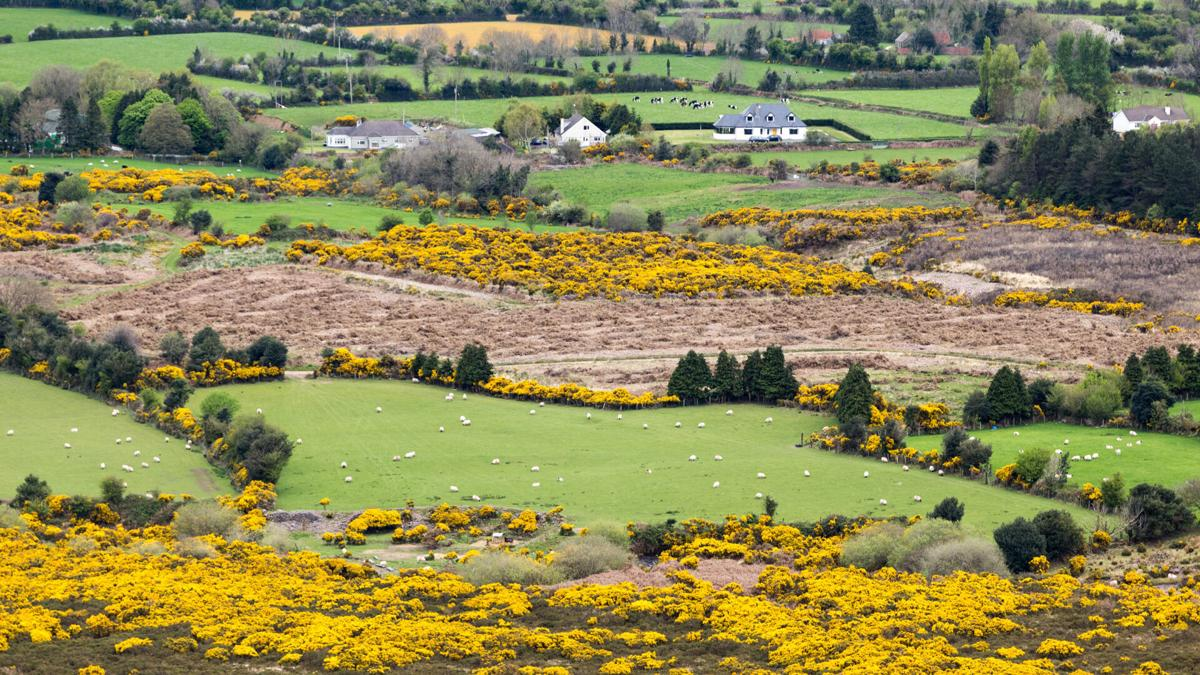 Tourism Ireland has confirmed that the country will begin welcoming visitors from the U.S. on July 19.
