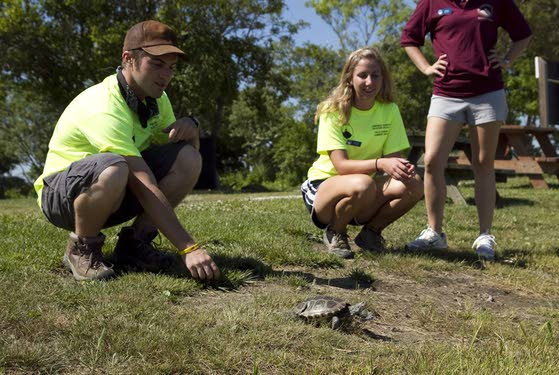 Devotion to turtles brings world to Middle Township