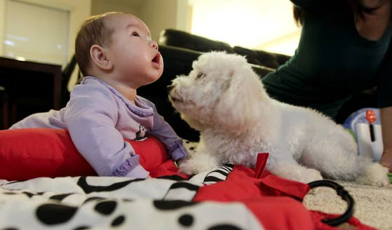 Baby on the way? Make time to prepare your pet