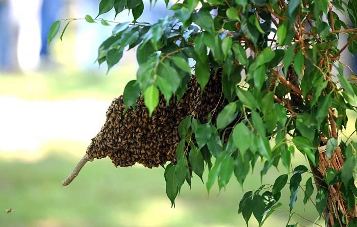 sj bees