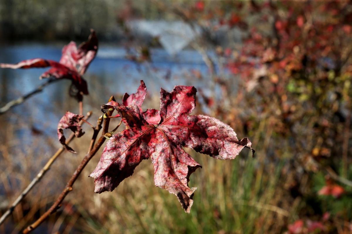110818_web_foliage