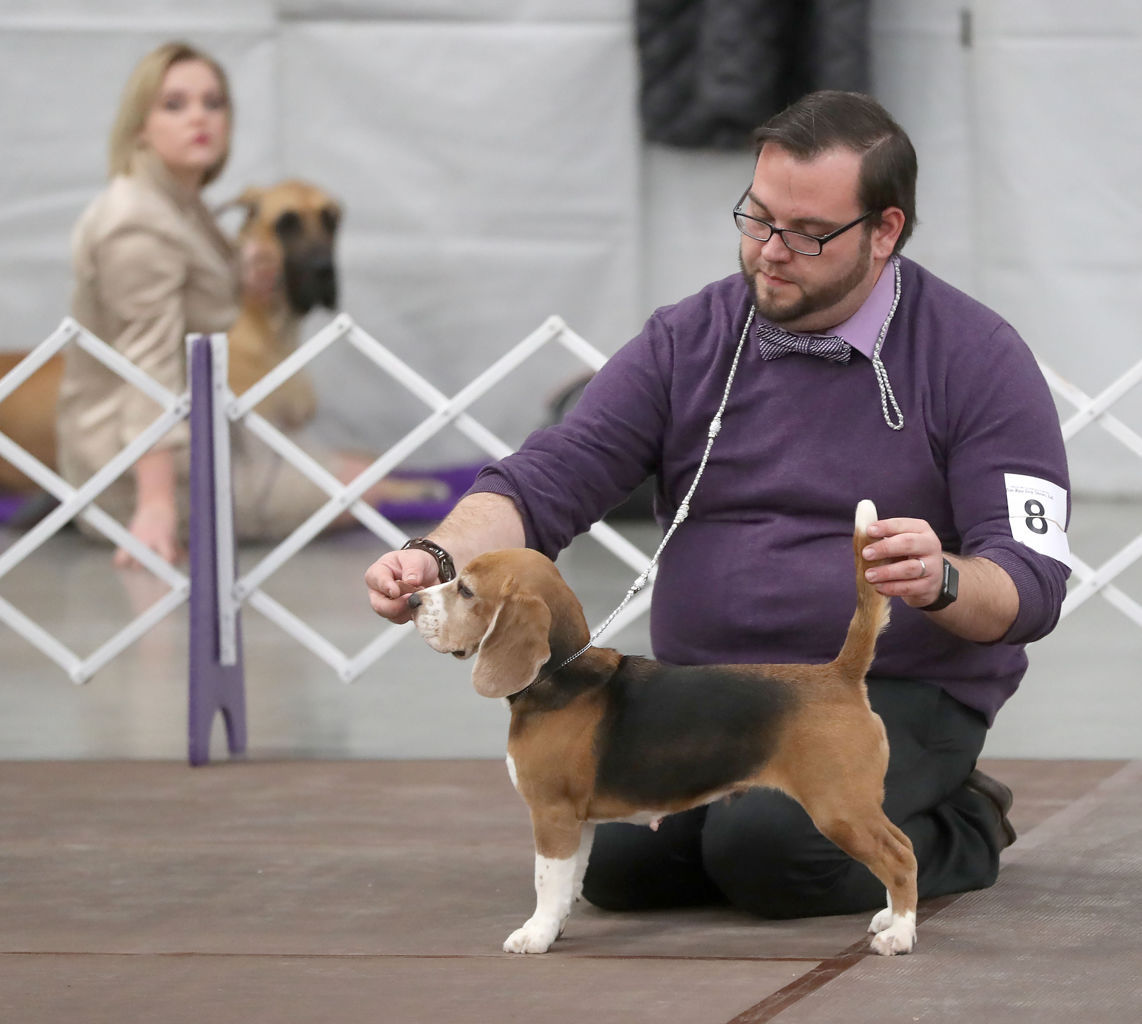 Wildwood Kennel Club Dog Show