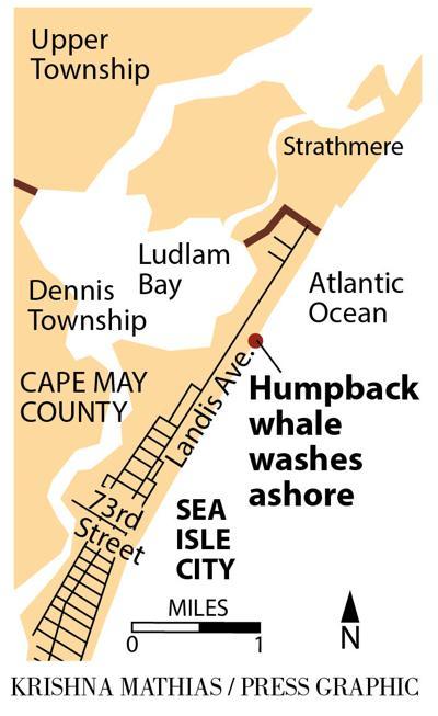 Humpback whale washes up Sea Isle City 9-2016